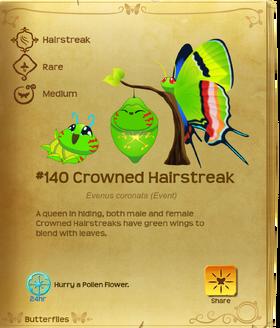 Crowned Hairstreak§Flutterpedia