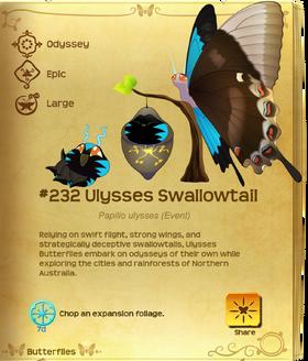 Ulysses Swallowtail§Flutterpedia