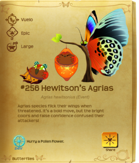 Hewitson's Agrias§Flutterpedia