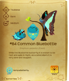 Common Bluebottle§Flutterpedia