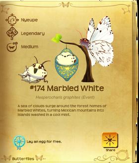 Marbled White§Flutterpedia