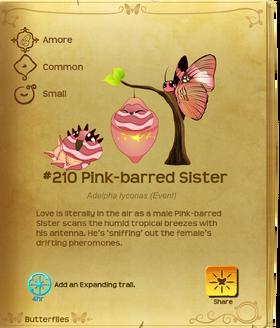 Pink-barred Sister§Flutterpedia
