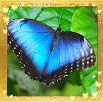 Flutterfact20140711Listening