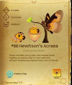 Hewitson's Acraea§Flutterpedia