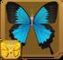 Ulysses Swallowtail§Headericon