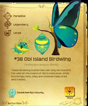Obi Island Birdwing§Flutterpedia