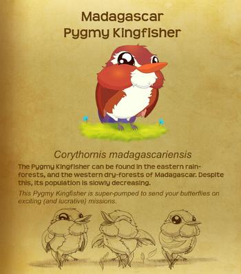 Madagascar Pygmy Kingfisher§Flutterpedia