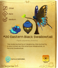 Eastern Black Swallowtail§Flutterpedia V1.90