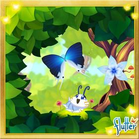 Large Fairy Hairstreak§Facebook