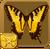Tiger Swallowtail§Headericon