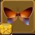 Orange-tailed Awl§Headericon
