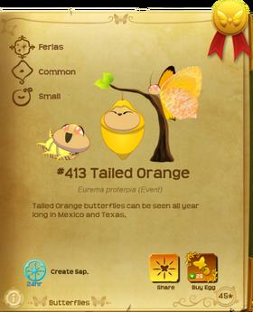 Tailed Orange§Flutterpedia