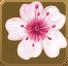 Hanabira Set§DecorationSingle CommonLeft