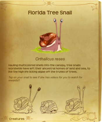 Florida Tree Snail§Flutterpedia