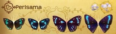Perisama Set§Flutterpedia