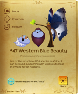 Western Blue Beauty§Flutterpedia