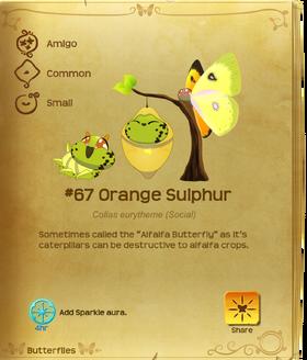 Orange Sulphur§Flutterpedia