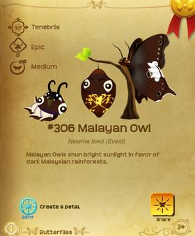Malayan Owl§Flutterpedia
