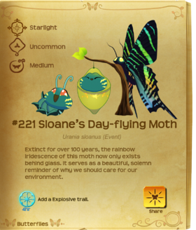Sloane's Day-flying Moth§Flutterpedia