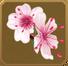 Hanabira Set§DecorationSingle DeluxeLeft