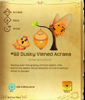 Dusky Viened Acraea§Flutterpedia