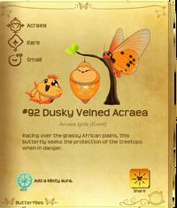 Dusky Veined Acraea§Flutterpedia