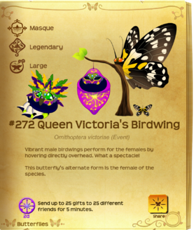 Queen Victoria's Birdwing§Flutterpedia UpgradedAlt
