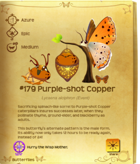 Purple-shot Copper§Flutterpedia Upgraded