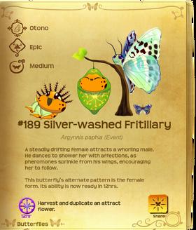 Silver-washed Fritillary§Flutterpedia UpgradedAlt