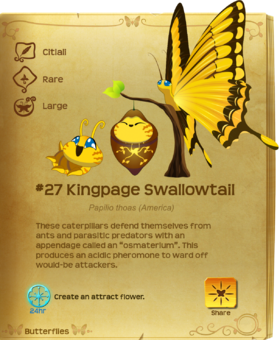 Kingpage Swallowtail§Flutterpedia