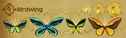 Birdwing Set§Flutterpedia Alt