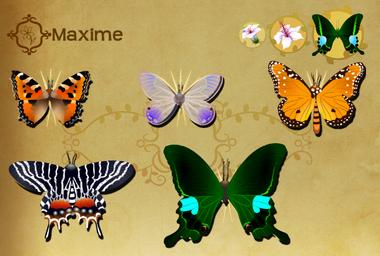 Maxime Set§Flutterpedia