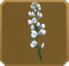 Apani Set§DecorationSingle CommonRight