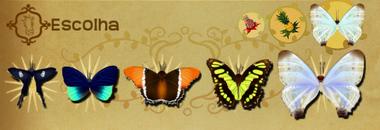 Escolha Set§Flutterpedia
