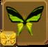 Southern Tailed Birdwing§Headericon