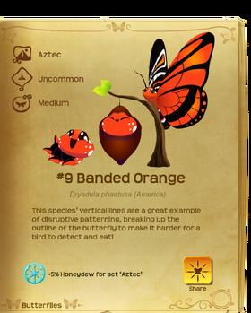 Banded Orange§Flutterpedia