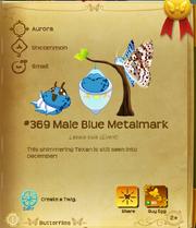 Male Blue Metalmark§Flutterpedia