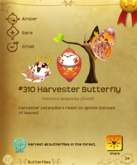 Harvester Butterfly§Flutterpedia