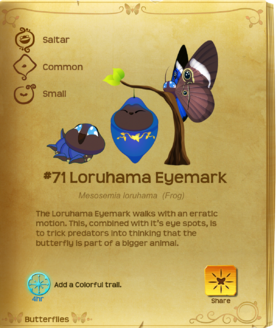 Loruhama Eyemark§Flutterpedia