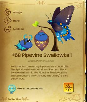 Pipevine Swallowtail§Flutterpedia