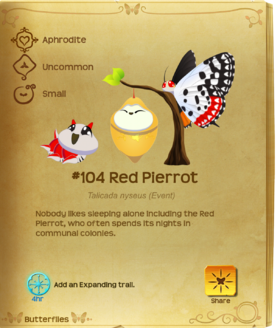 Red Pierrot§Flutterpedia