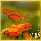 Flutterfact20130814TastingFeet