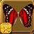 Scarlet Peacock§Headericon