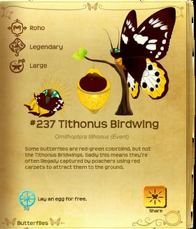 Tithonus Birdwing§Flutterpedia