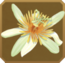 Praesidio Set§DecorationSingle CommonLeft