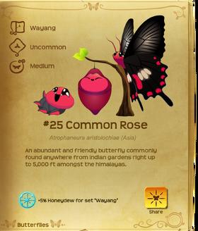 Common Rose§Flutterpedia