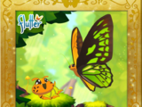 Wallace's Golden Birdwing