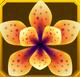 Hanwi Set§AF3 100%