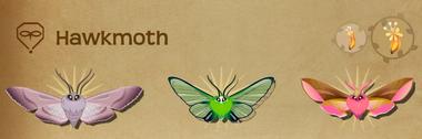 Hawkmoth Set§Flutterpedia