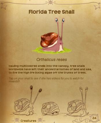 FloridaTreeSnailFlutterpedia